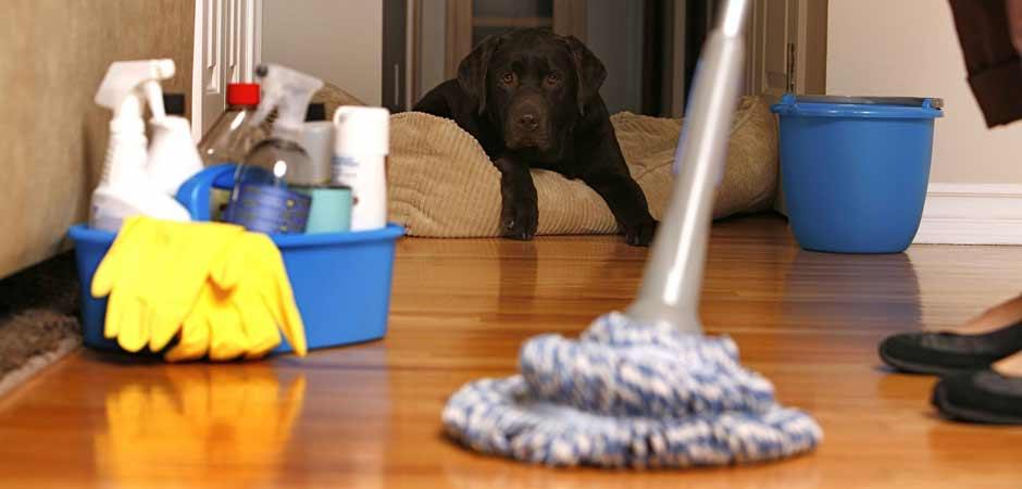 Άψογος καθαρισμός της οικίας σας με σεβασμό στο περιβάλλον